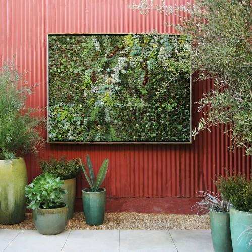 Succulent-wall-131bweb__68649_std