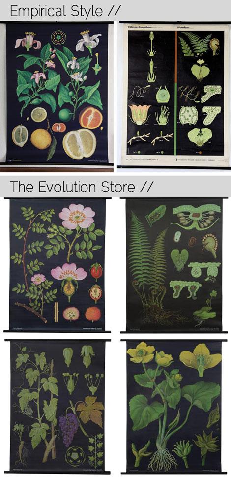 Botanical-Charts
