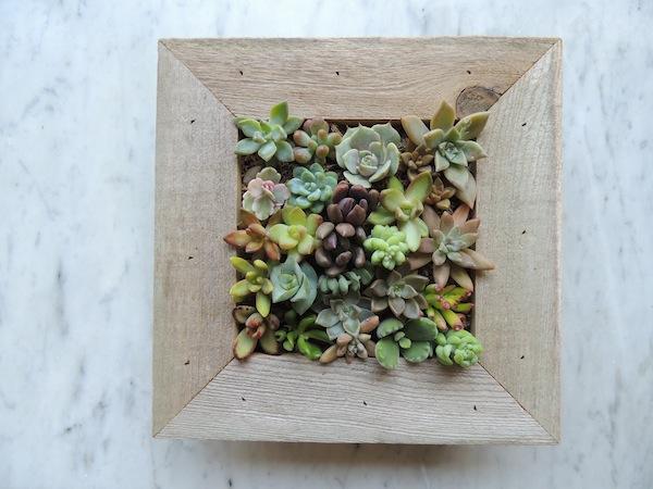 ... Succulent Living Wall Planter: Succulents