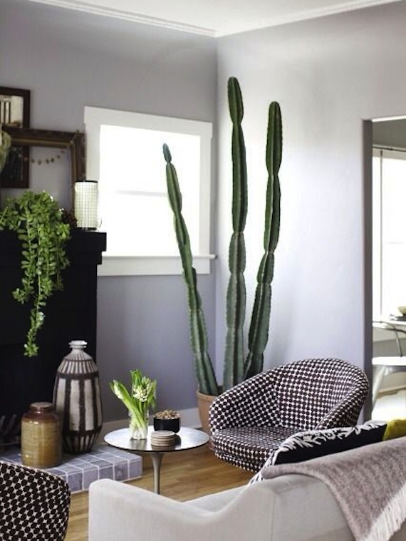 Interiors I Love Indoor Cactus K Sarah Designs